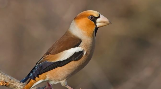 Aggiornamento liste uccelli da sapere per esami di caccia